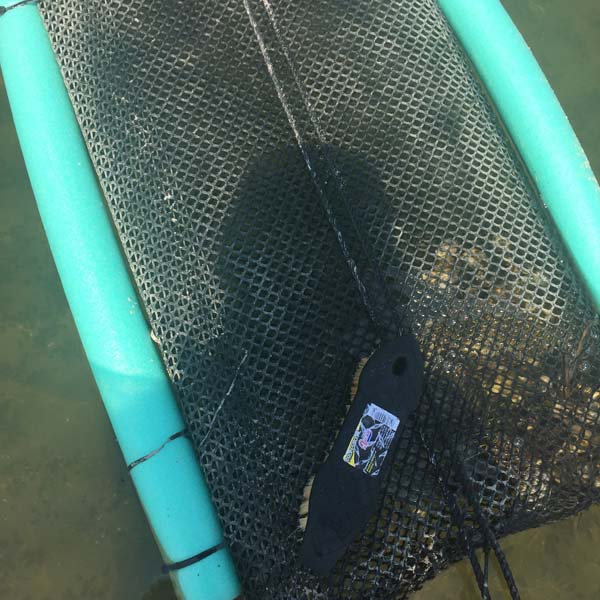 Moriches Bay Cage Cleaning