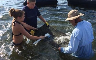 Cleaning the Oyster Farm Over in Brookhaven