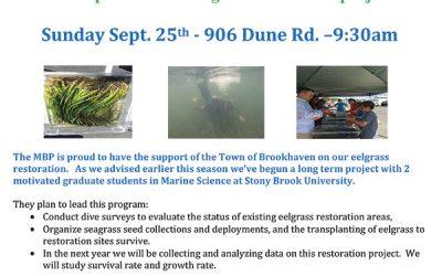 Volunteers Needed For Eelgrass Restoration Project