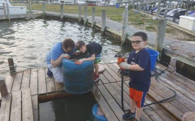 Boy Scouts Maintaining FLUPSY at Windswept Marina
