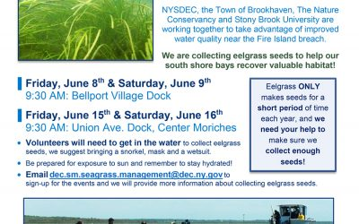 Eelgrass Seed Collection Events